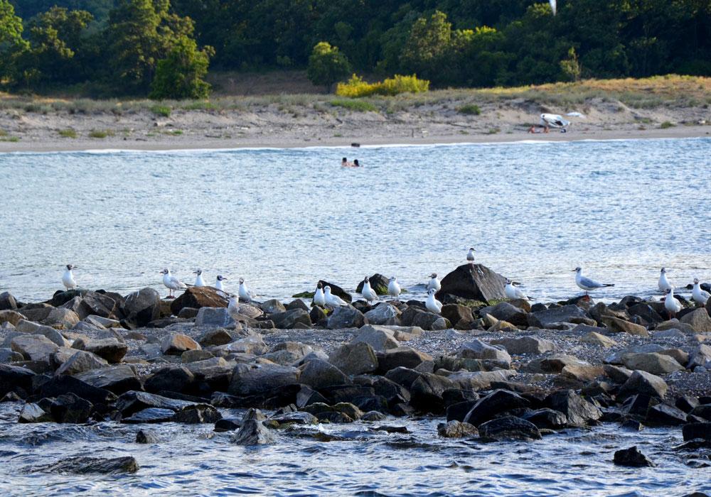 Rejs po rzece Ropotamo w Parku Narodowym, podczas którego można podziwiać różnorodność fauny, flory i amatorów dzikich plaż , fot. Andrzej Nawrocki.